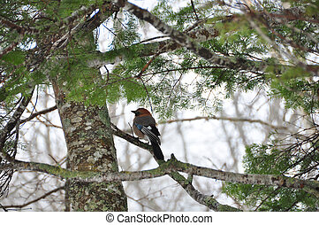 bird on a branch in the winter