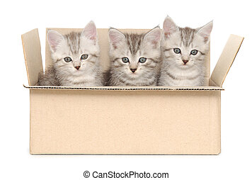 small kittens - Three small kittens in a cardboard box