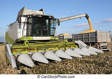 Combine harvesting a corn crop