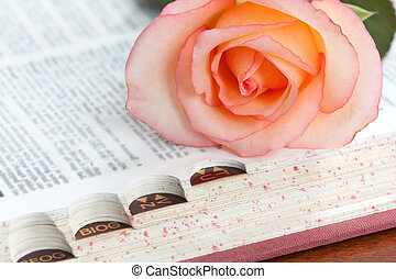 rose on a dictionary - A pink rose on the index edge of a...