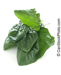 Fresh spinach leaves on isolated white background