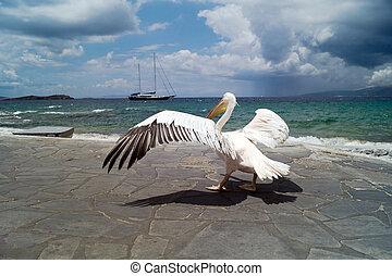 The famous Pelican of Mykonos island in Greece