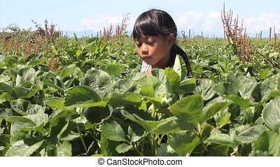 Asian Girl With Fresh Picked Berry - A cute little seven...