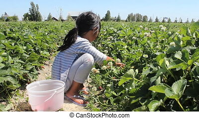 Girl Searches For Strawberries - A cute little seven year...
