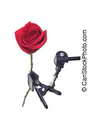 Red rose mounted on tripod, isolated on white background
