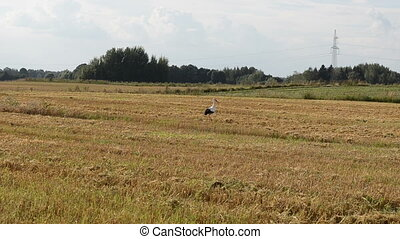 stork look food field