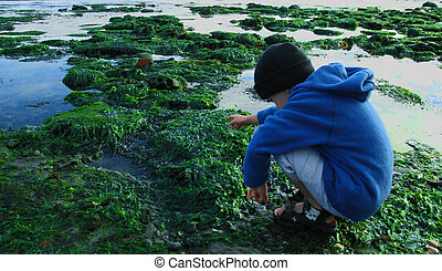 Young boy exploring a tidal pool