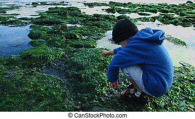 Young boy exploring a tidal pool
