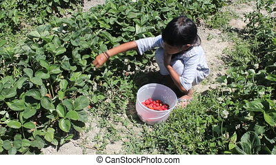 Asian Girl Filling Strawberry Pail - A cute little seven...