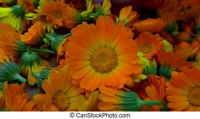 many marigold flowers to dry