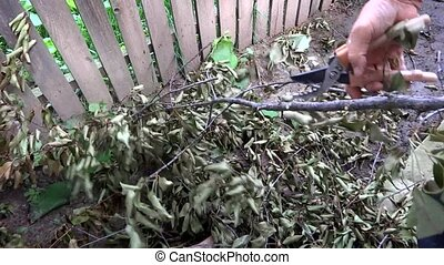 person clearing a dry tree branch