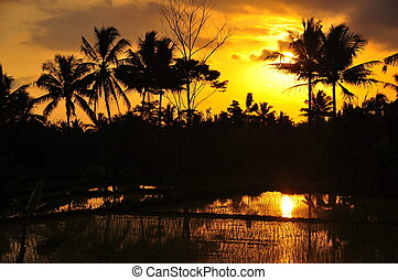 Silhouette Palm Trees at Sunset - Stock Photo - Silhouette...