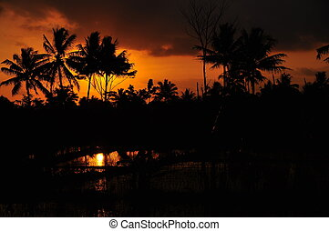 Silhouette Coconut Trees at Sunset
