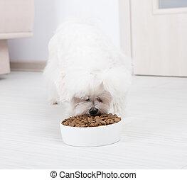 Dog eating dry food