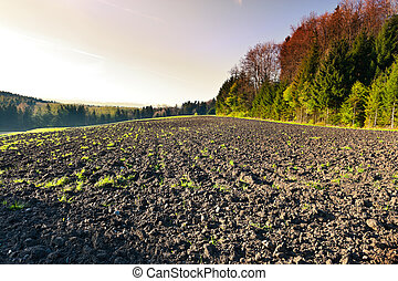 Plowed Fields near the Forest in Swiss Alps, Sunset