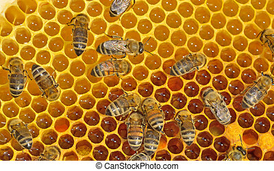 working bees on honeycells - details of working bees on...