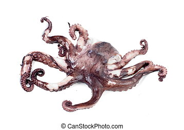 octopus shot over white background .