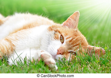 cat in the grass - young cat in the grass