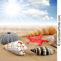 Conch shell with starfish on the beach