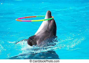 à, giovane, delfino, gioco, blu, acqua, cerchio