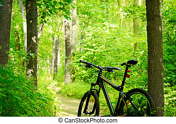Mountain Bike on the Trail in the Forest - Mountain Bike on...