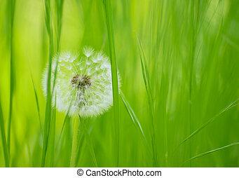Dandelion Flower in a Green Meadow - Dandelion Flower in a...