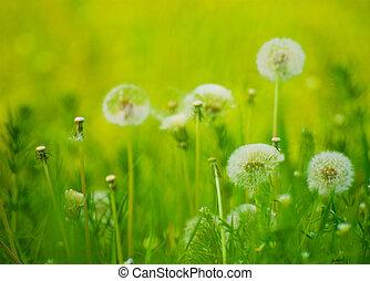 Dandelion Flowers in a Green Meadow - Dandelion Flowers in a...