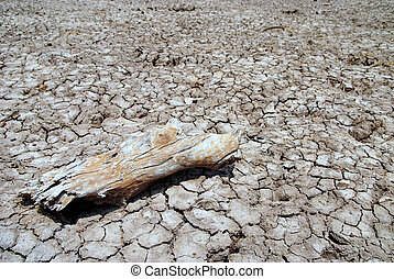 Dried ground - Dried timber on the cracked ground