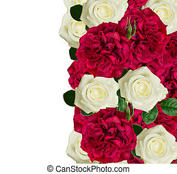 white and red roses border