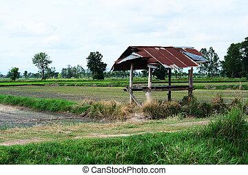 a little hut in farm