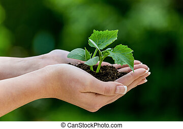 woman keeps plant in hand symbolic photo for growth and...