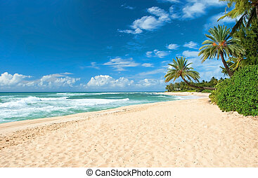 Untouched sandy beach with palms trees and azure ocean in...