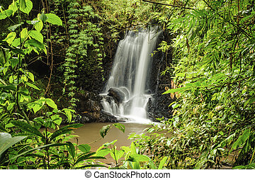 Rain Forest Clearing - Beautiful waterfall in a clearing in...