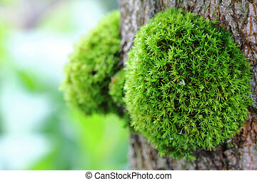 Small clump of Green Moss - A closeup of small clump of...