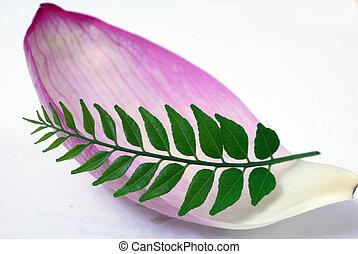 Cor-de-rosa, folha, loto, pétala, verde, caril