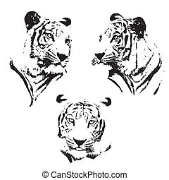 Tiger sketch. - Tiger sketch isolated background, Vector...