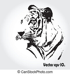 Tiger sketch - Tiger sketch isolated background, Vector...