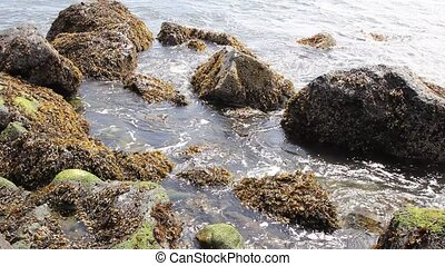 Rocks with Seaweeds and Waves at Low Tide along Oregon Coast