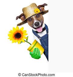 gardener dog - happy gardener dog with a flower behind a...