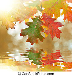 Autumn oak leaves mirrored on water level