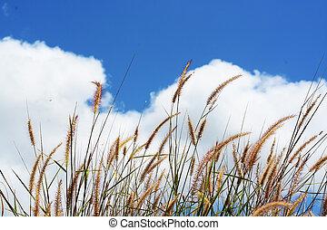 藍色, 草, 天空, 多雲, 在下面, 花