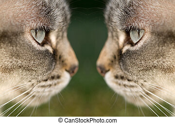 cat face to face - Closeup portrait of two cats face to face