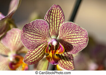 Freaky orchid pink and yellow