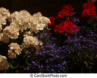 Red, White and Blue - Red, white and blue flowers