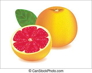 Grapefruit - vector illustration . Grapefruit on white...