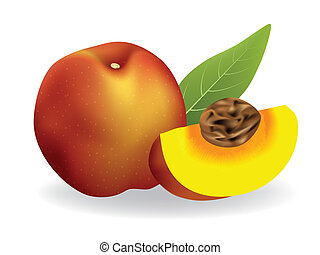 peach - vector illustration Peach on white background