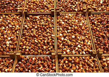 Tulip bulbs at flower market - Tulip bulbs at Amsterdam...