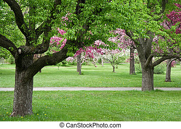 Trees in blooming orchid