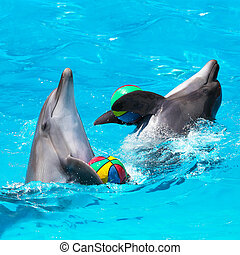 Two dolphins playing in the blue water with balls