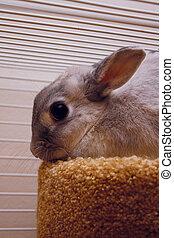 Sad bunny prisoner